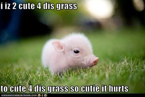 i iz 2 cute 4 dis grass  to cute 4 dis grass so cutie it hurts