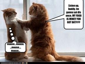 The ignorant kitteh