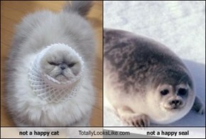 not a happy cat Totally Looks Like not a happy seal