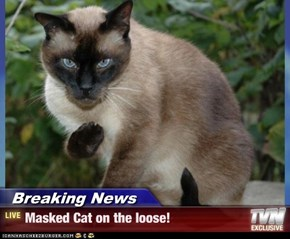 Breaking News - Masked Cat on the loose!