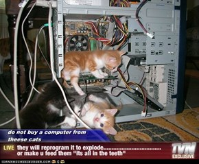 "do not buy a computer from theese cats - they will reprogram it to explode................................... or make u feed them ""its all in the teeth"""