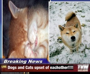 Breaking News - Dogs and Cats upset of eachother!!!!