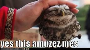 yes this amuzez mes