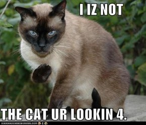 I IZ NOT  THE CAT UR LOOKIN 4.