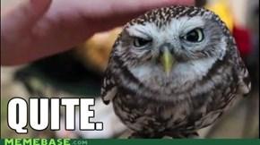 Quite Owl
