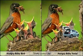 Hungry Baby Bird Totally Looks Like Hungry Baby Yaris!