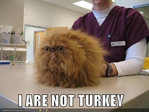 I ARE NOT TURKEY