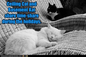 Ceiling Cat and Basement Katshare time-shareduring the holidays.