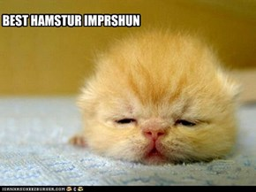 Hamster Impression
