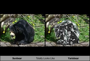 Sunbear Totally Looks Like Yarisbear