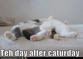 Teh day after caturday
