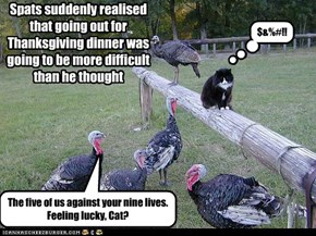 Spats suddenly realised that going out for Thanksgiving dinner was going to be more difficult than he thought