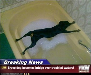 Breaking News - Brave dog becomes bridge over troubled waters!