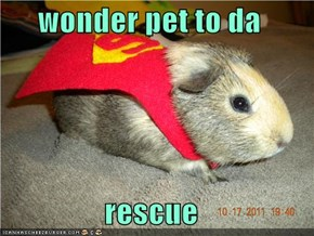 wonder pet to da   rescue