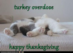 turkey overdose             happy thanksgiving