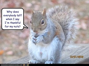 Why does everybody laff when I say I'm thankful for my nuts?