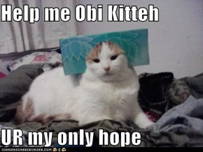 Help me Obi Kitteh  UR my only hope