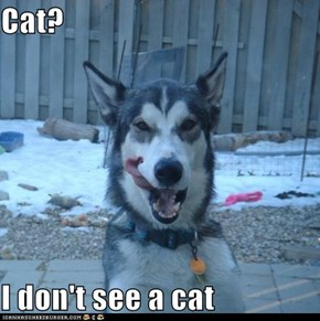 Cat?  I don't see a cat