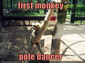 first monkey  pole dancer