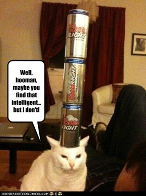 Disappoint cat is disappoint