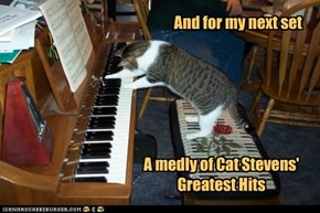 Predictable Choices of Feline Musicians