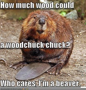 But, What if You WERE a Woodchuck??