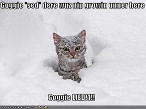 Goggie *sed* dere wuz nip growin unner here  Goggie LIED!1!!