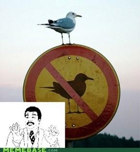 We Got a Birdass Over Here!