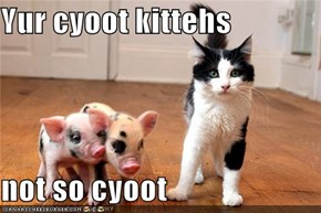 Yur cyoot kittehs
