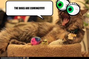 THE DOGS ARE COMING!!!!!!!