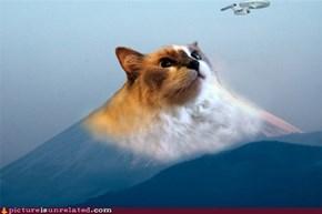 Fuji-Cat with Star Trek Vessel WTF?