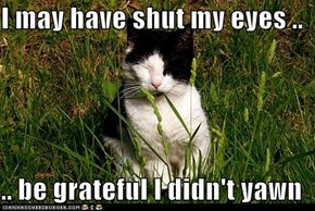 I may have shut my eyes ..  .. be grateful I didn't yawn