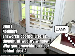 OHAI !  Nobuddy  answered  doorbell ,  so  ai  thought  ai  wud  try  window !Why  yoo  crowchin  on  floor  behind  desk ?