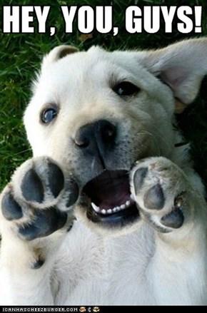 Goonies...Puppy Style