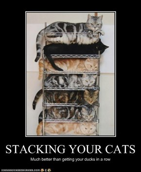 STACKING YOUR CATS