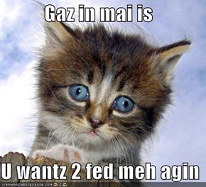 Gaz in mai is  U wantz 2 fed meh agin