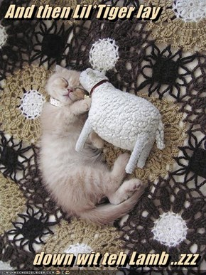 And then Lil*Tiger lay   down wit teh Lamb ..zzz