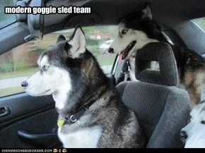 modern goggie sled team