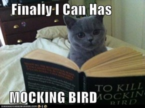 Finally I Can Has   MOCKING BIRD