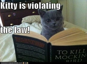 Kitty is violating the law!
