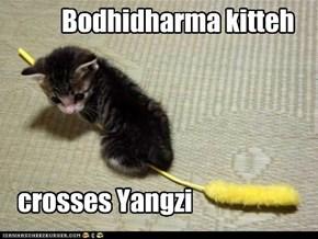 Bodhidharma kitteh