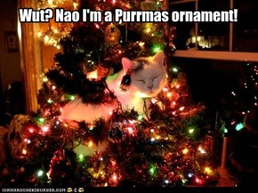 Purrmas Tree has a Kitteh!