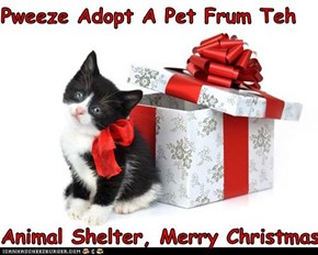 Pweeze Adopt A Pet Frum Teh  Animal Shelter, Merry Christmas
