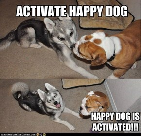 ACTIVATE HAPPY DOG
