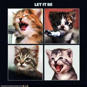 The Kitten Covers: A Journey Through Mewsic