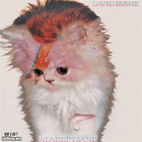 Kitten Cover WIN