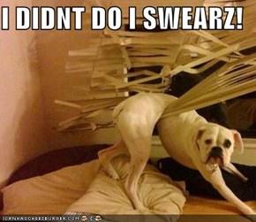 I DIDNT DO I SWEARZ!