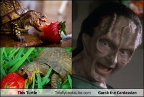 This Turtle Totally Looks Like Garak the Cardassian