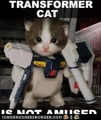 transformer cat
