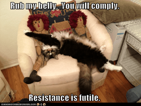 Rub my belly.  You will comply.                   Resistance is futile.